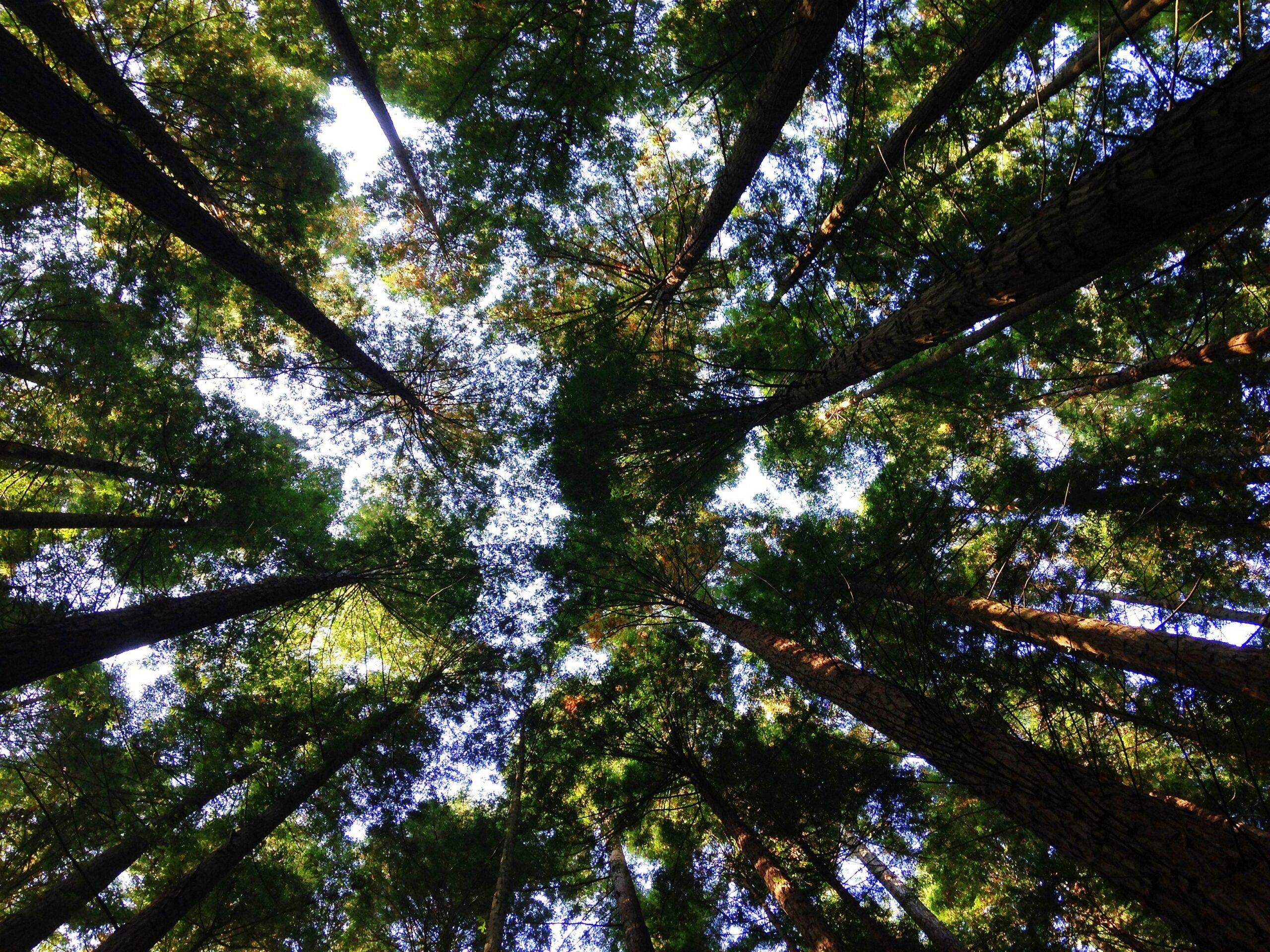 Vides pārvaldības standarts ISO 14001